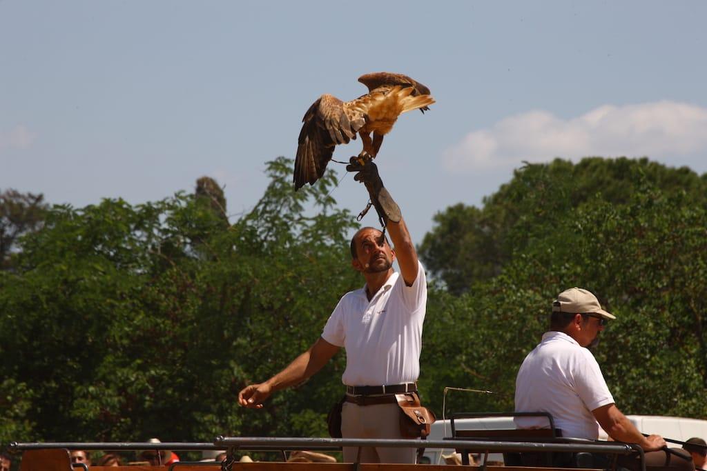 falconeria grosseto