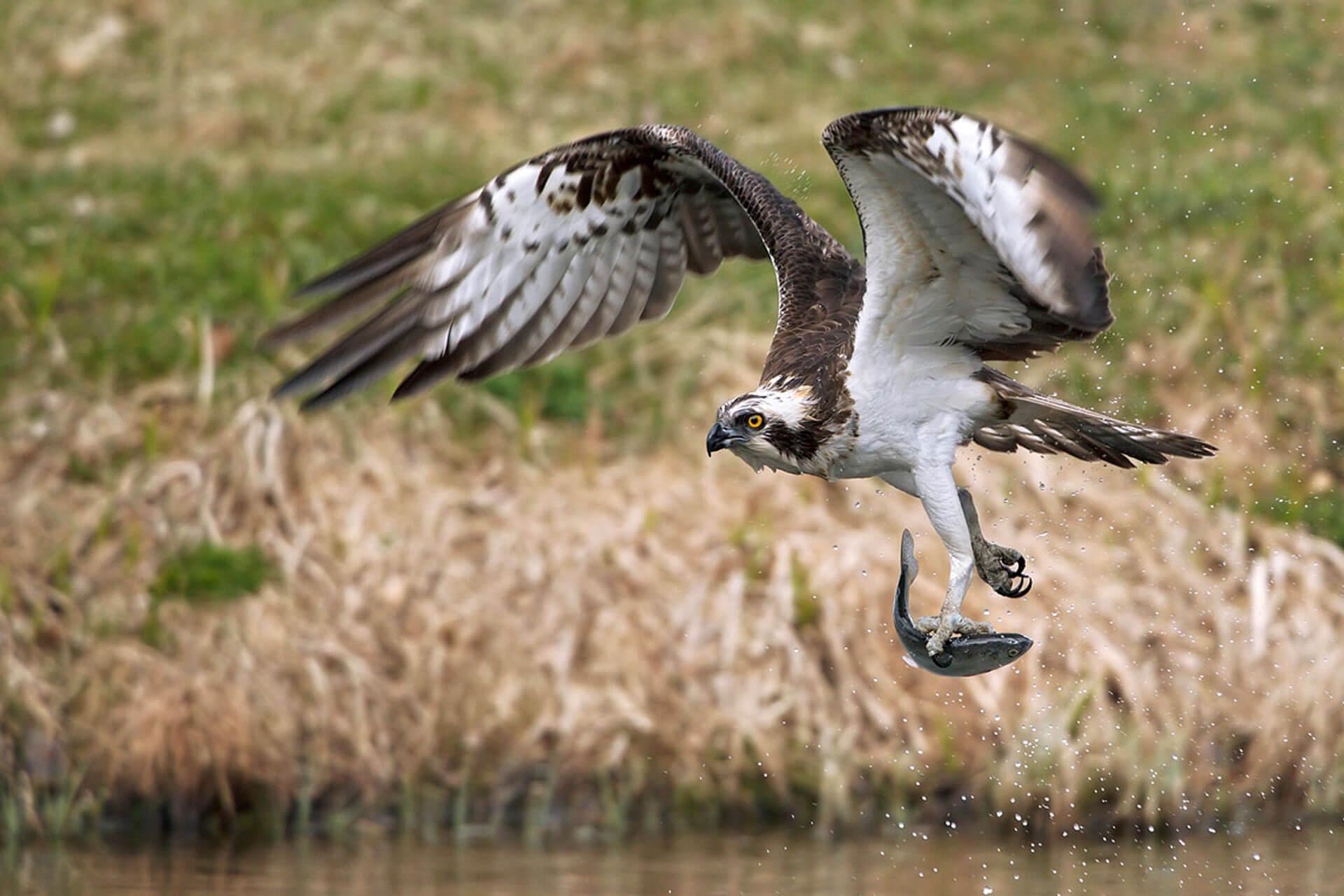 falconeria maremma toscana